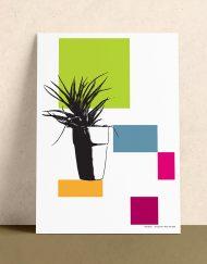 arrangements plant